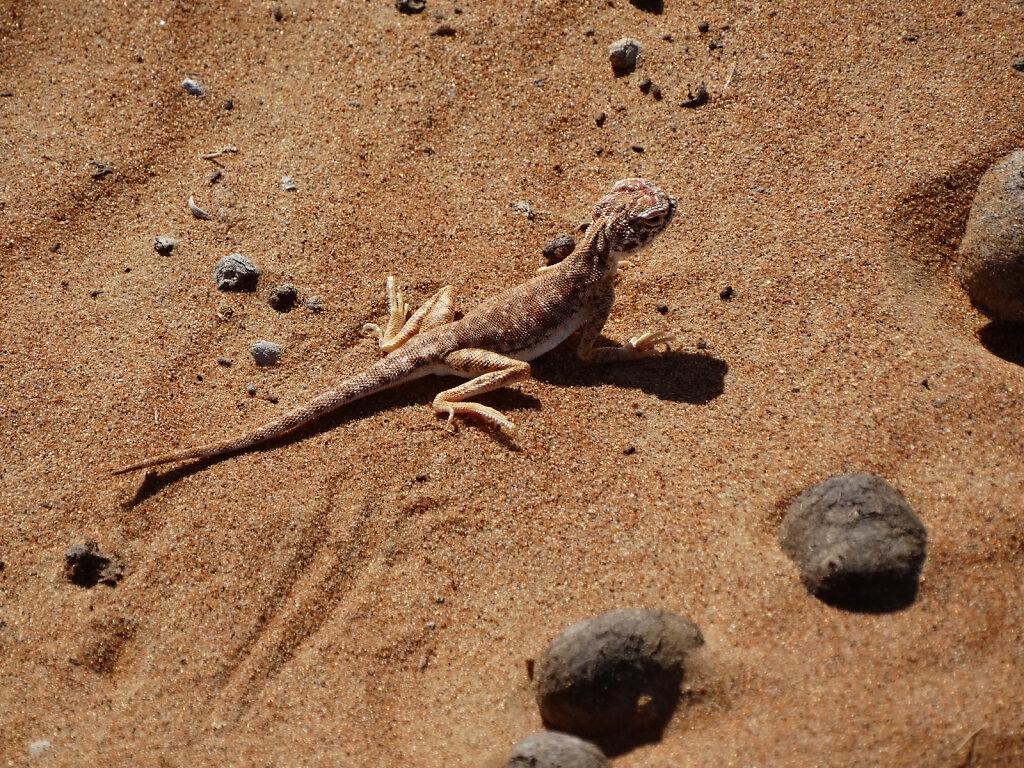 Echse / Lizard